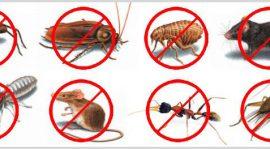 مكافحة الحشرات فى جدة