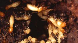 مكافحة النمل الابيض فى جدة