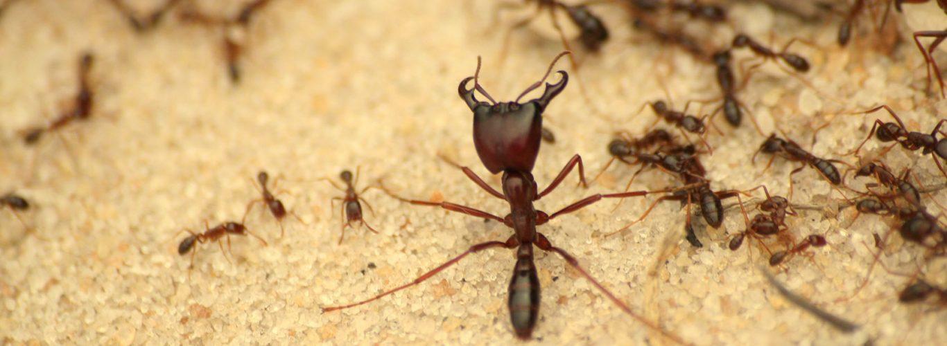 شركه مكافحة النمل الأبيض بجده