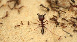 ارخص شركة فى جدة لمحاربة النمل الابيض
