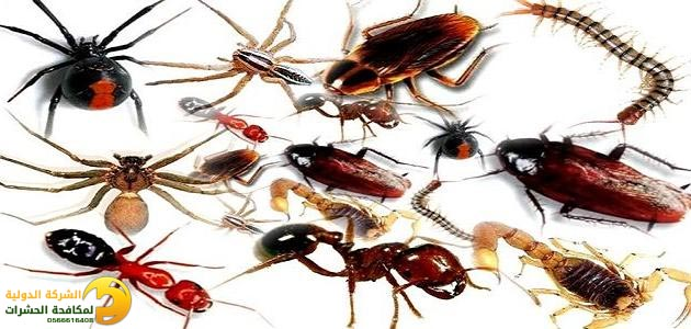 الشركة الدولية لمكافحة الحشرات بجدة