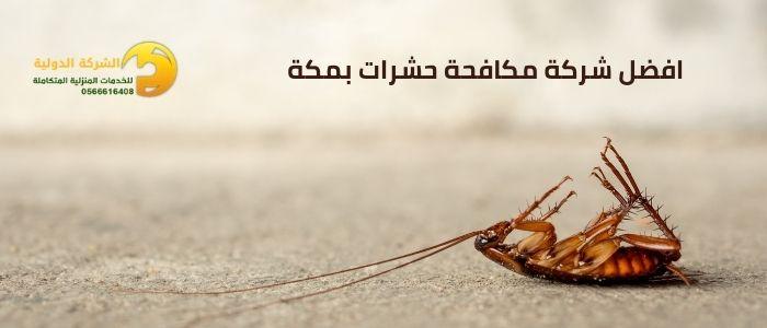 افضل شركة مكافحة حشرات بمكة