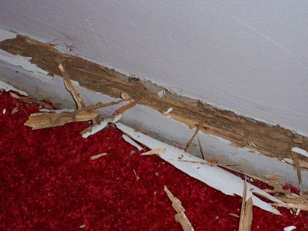 مكافحة العتة بجدة وأضرارها على الأرضيات الخشبية