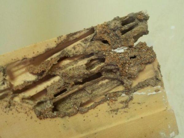 مكافحة العتة وأضرارها على الأرضيات الخشبية