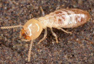 خدمات مكافحة النمل الابيض بجدة بالضمان