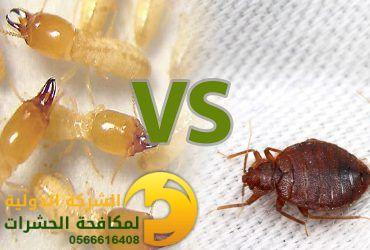 الفرق بين بق الفراش و النمل الابيض والتخلص منهما
