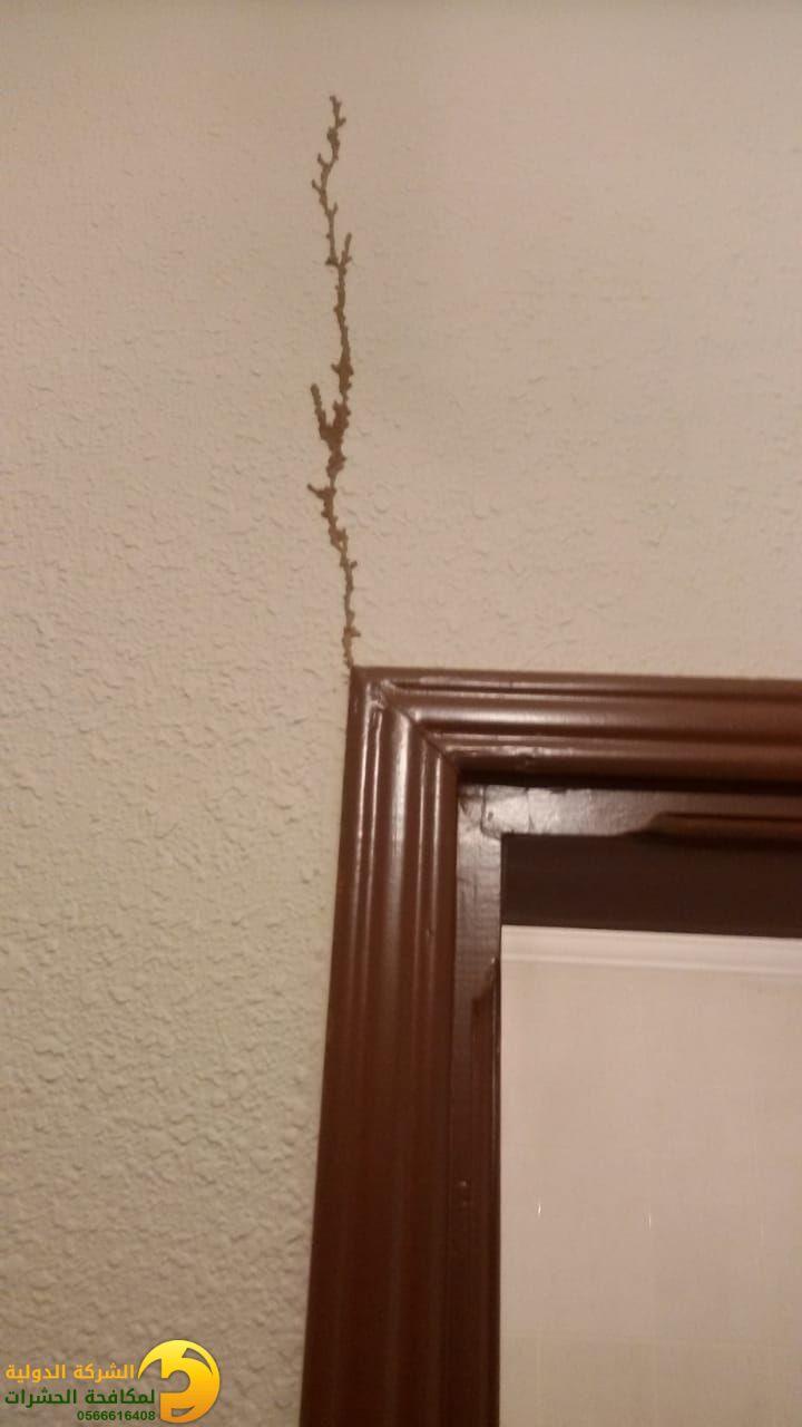 كوارث النمل الأبيض