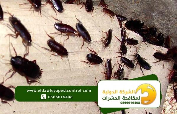 الصراصير و اضرارها وكيفية التخلص منها