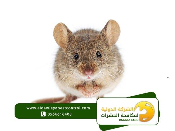 شركة مكافحة الفئران جدة