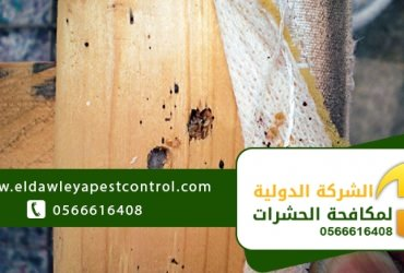 4 أقوال خاطئة حول حشرات بق الفراش