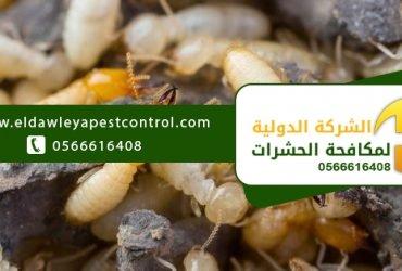 علامات وجود النمل الابيض في البيت