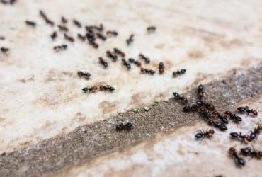 افضل 10 طرق للقضاء علي النمل بالمنزل
