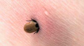 حشرات تتغذى على دماء البشر