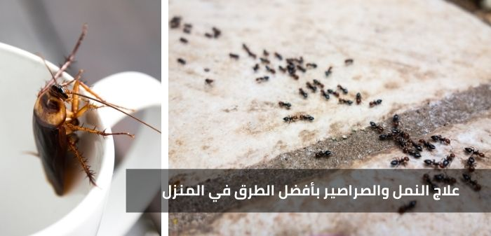 علاج النمل والصراصير بأفضل الطرق في المنزل