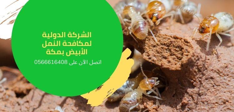 مكافحة النمل الأبيض في مكه